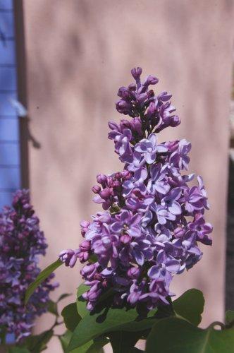 flowers-18.JPG