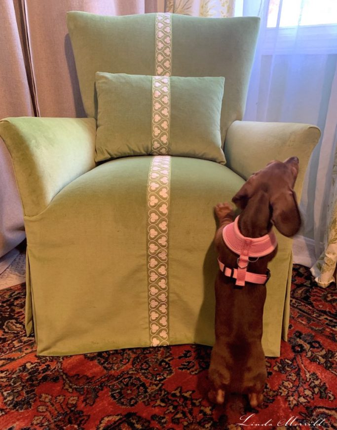 Linda Merrill reupholster an old chair JAB velvet fabric Sansa puppy