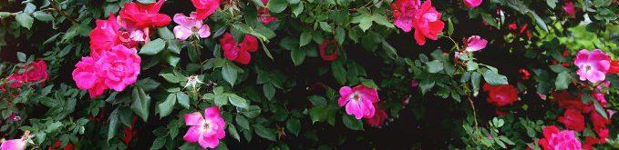 Een foto van bloemen