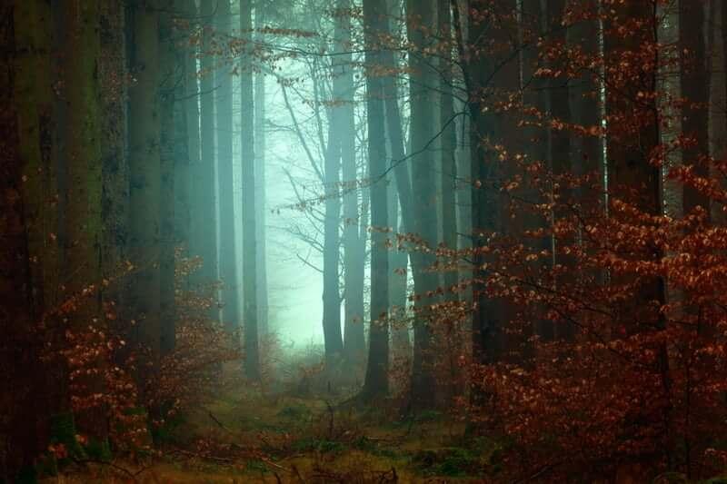 Foto van bos van Johannes Plenio, unsplashfoto's