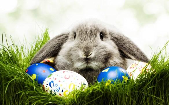 paaske hare med egg