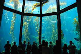 monterey bay aquarium tank