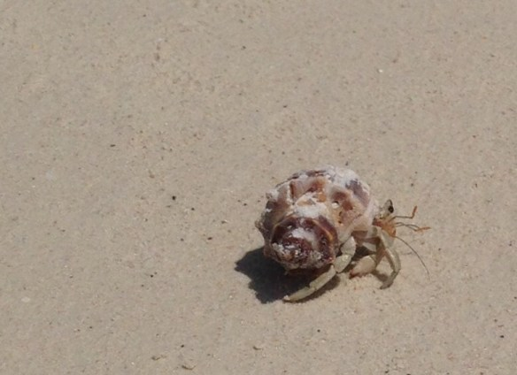 Landkrabbe Pattaya Beach Koh Lipe 1