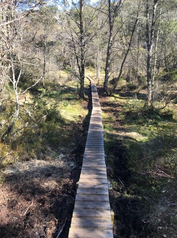Platting å gå på til Kolbeinsvarden over de verste våte områdene fra Steinrusen – Kopi – Kopi