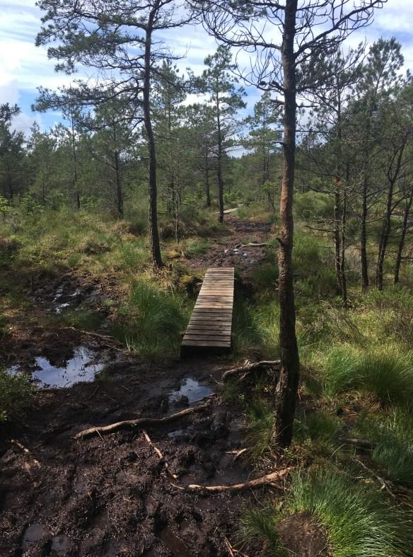 Askøy på langs - etappe 2 - hjelper godt på med broer gjennom skogen