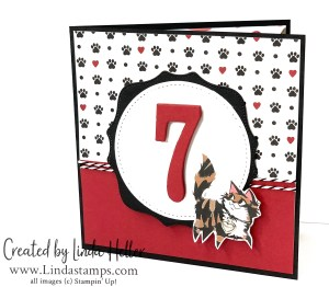 Pampered Pets: Birthday Card