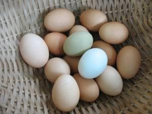 pasture raised eggs in VT