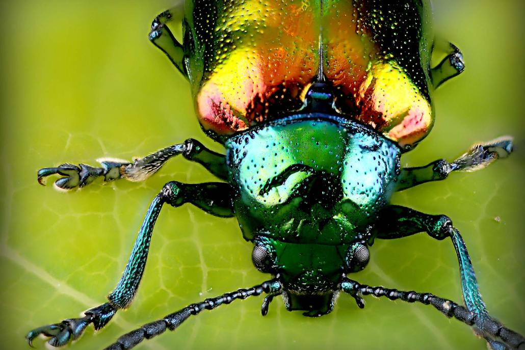 Colorful Beetle, Tacoma-based and family-owned pest control and inspection company