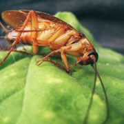 cockroach on leaf