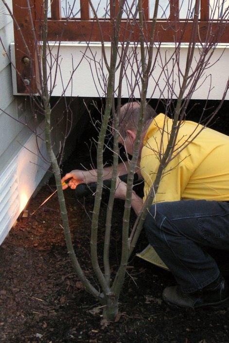 Lind Pest Control in progress