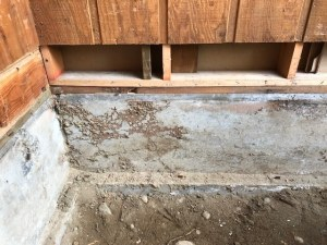 "Identifying Subterranean Termite ""mud tubes"""
