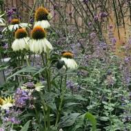 clayton-le-woods garden design 1c