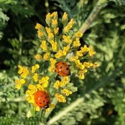 Wildlife friendly plants
