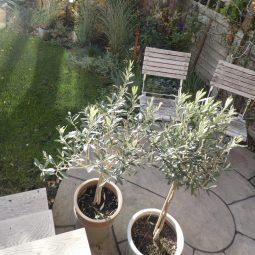 chorlton garden design 1n