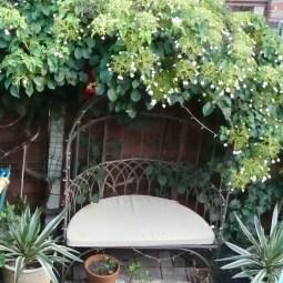 chorlton garden design 1q