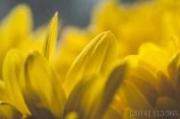 Nikon D300s || 40mm lens || ISO 500 || f 7.1 || 1/250s