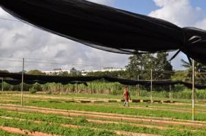 Urban Farm, Matanzas