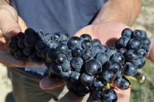 Harvest in La Rioja