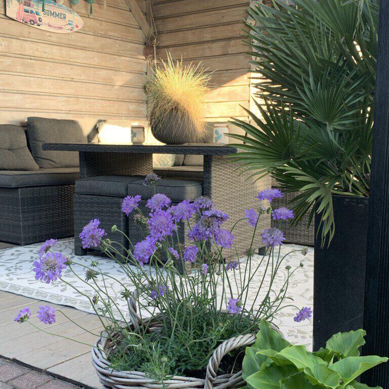 Je tuin zomerproof maken