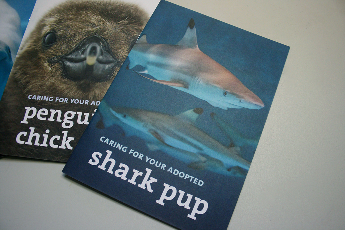 The cover of a booklet, featuring a large photo of a shark pup and the title, 'Caring for your adopted shark pup'.
