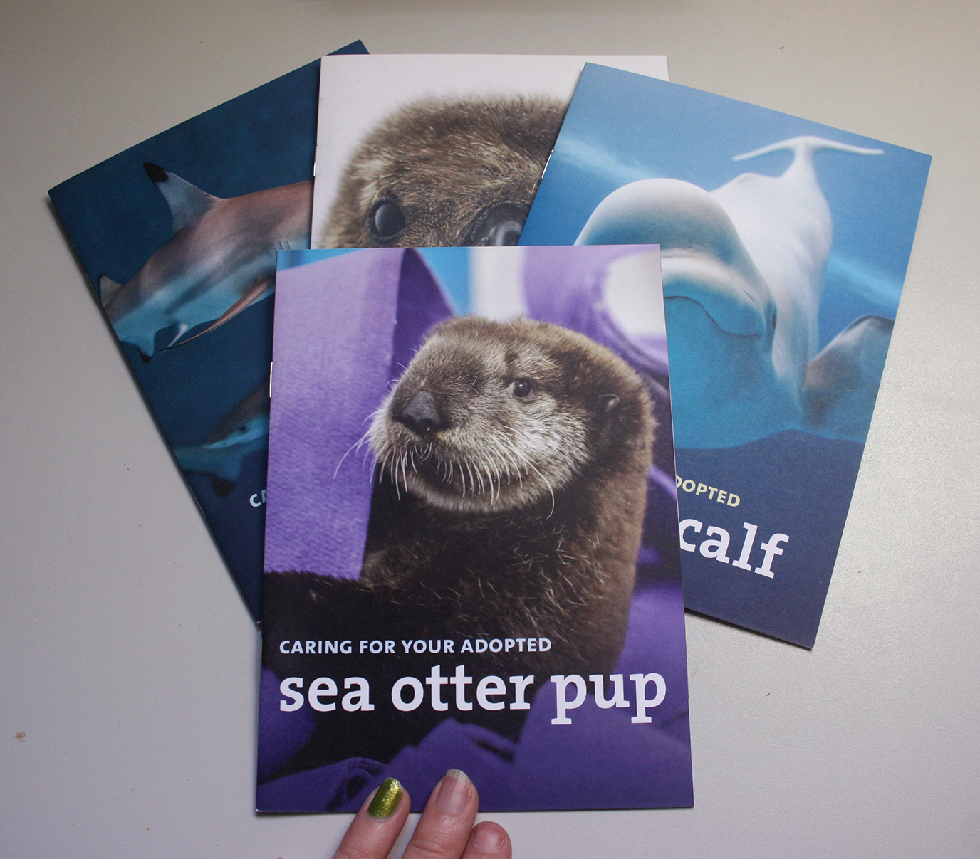 A set of four booklets are shown with one on top. The top booklet has a photo of a fluffy sea otter pup on the cover, with the title, 'Caring for your adopted sea otter pup'.