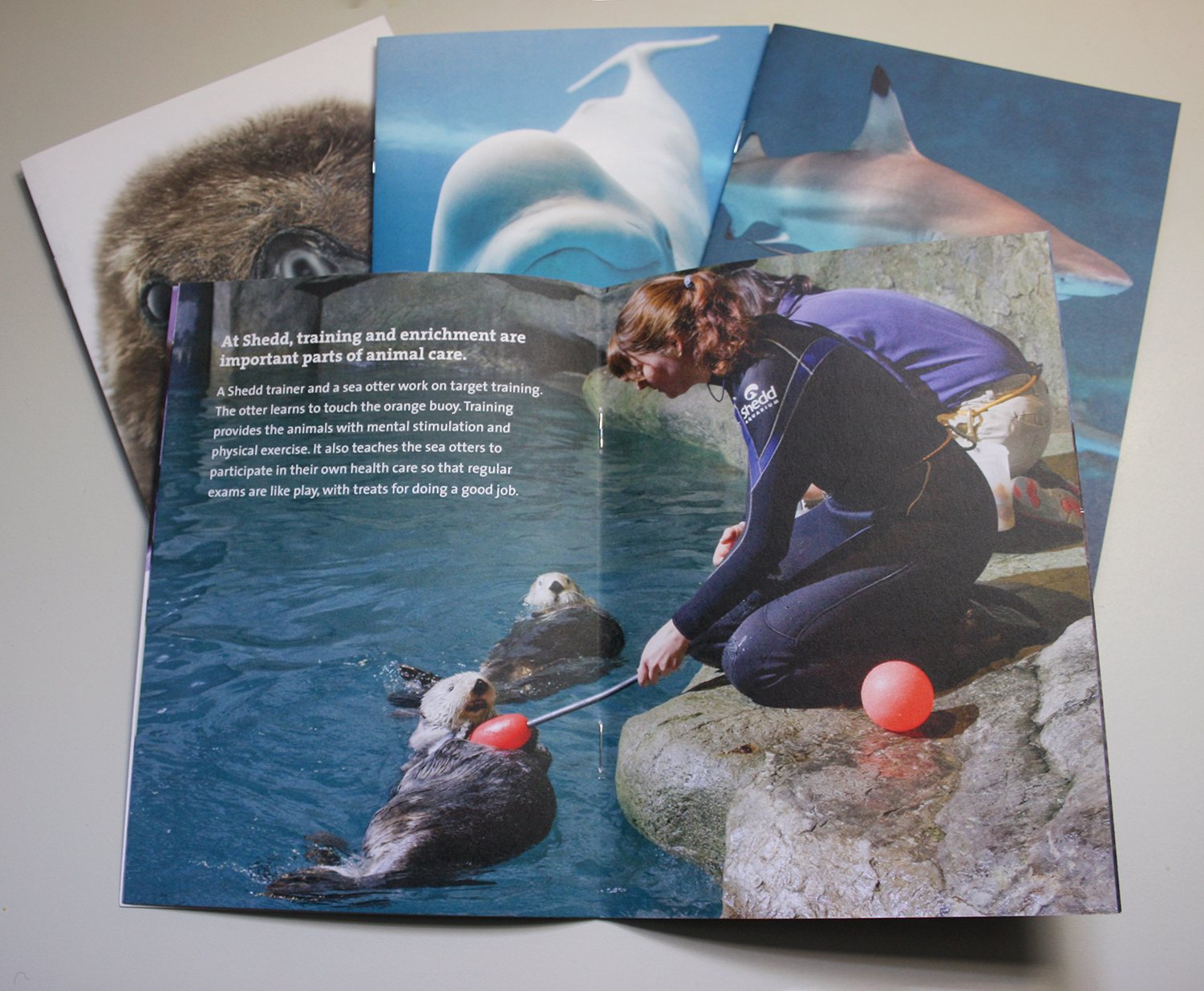 A booklet is opened to a full-spread image of a trainer holding out a stick with an orange buoy on the end for a sea otter to touch. Descriptive text in the top left corner describes training and enrichment practices at Shedd.