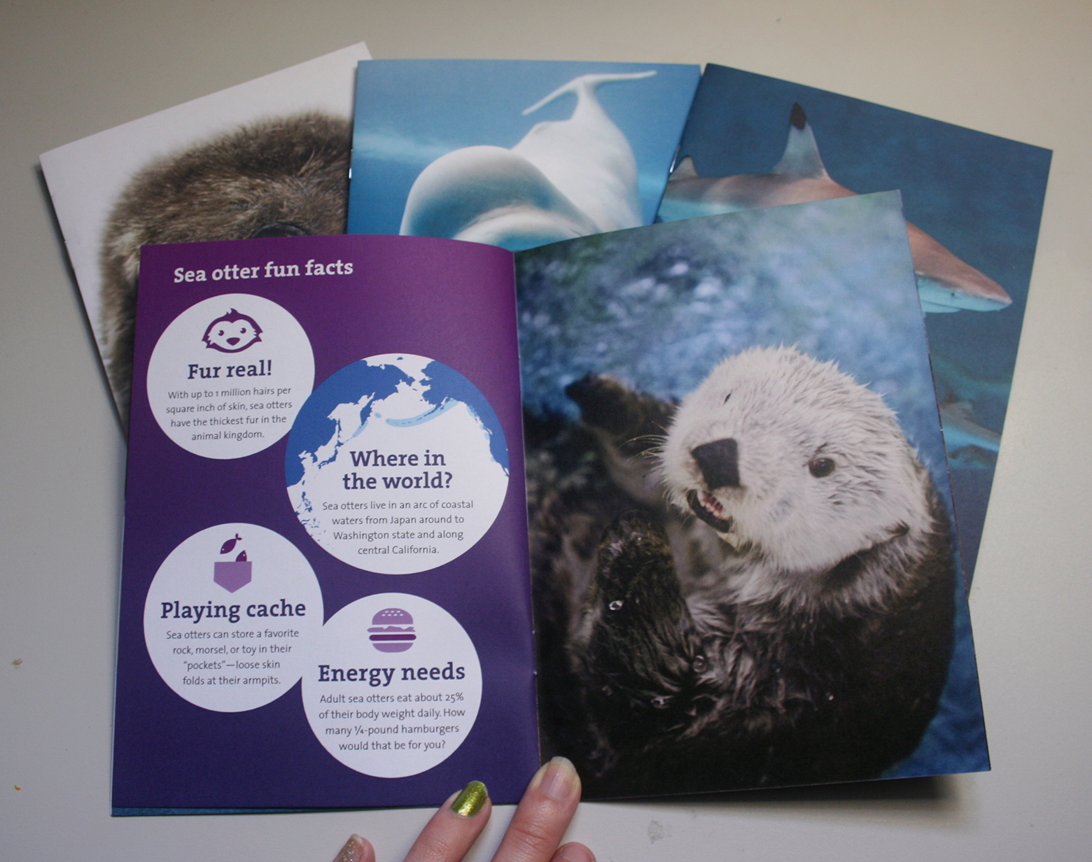 A booklet is shown opened to an infographic spread. On the left page are white circles over a purple gradient. The title reads, 'Fun sea otter facts'. Each circle contains an icon and a fun fact about otters. The right page has a photo of a sea otter in the water, stretching up to look at the camera.