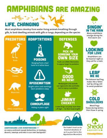 PR1501_Amphibians_Print_Infographic_P2_FINAL
