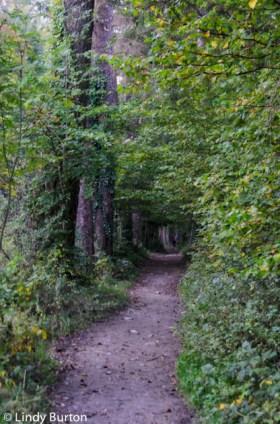 Walking in woodlands