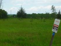 Belleville Area - Trees on ROW