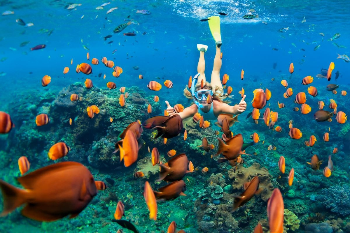 buceo isla baru colombia ecoturismo