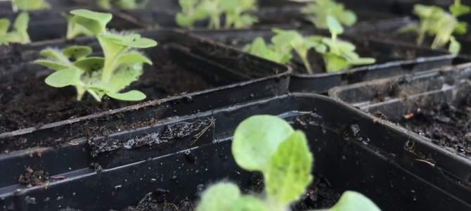 Wie unsere Pflanzen wachsen