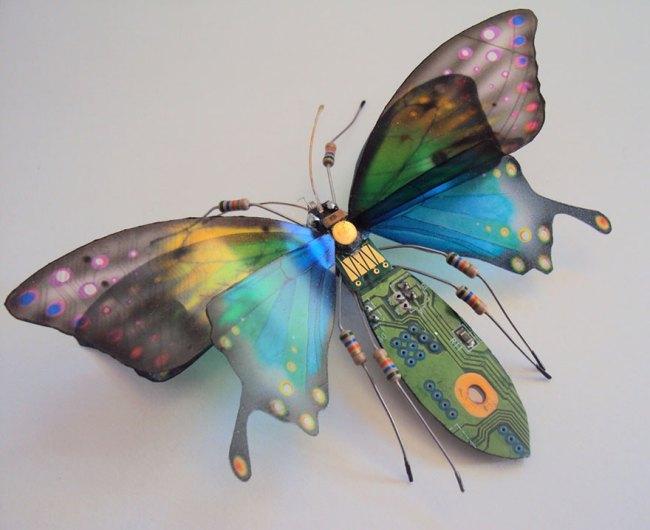 entomo15