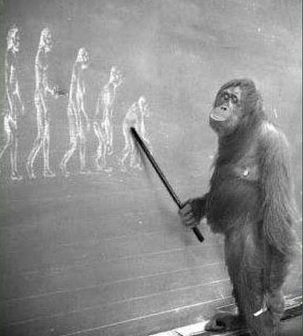 Η εξέλιξη του ανθρώπου12