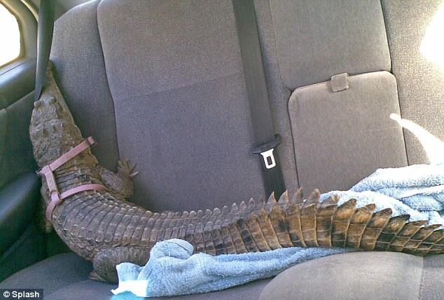 krokodeilaki6