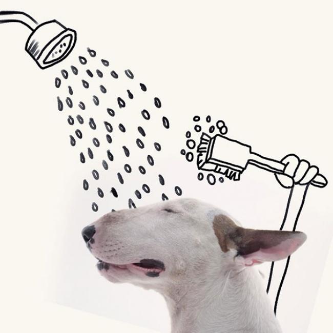 38655-R3L8T8D-650-Jimmy-the-Bull-Terrier20__605