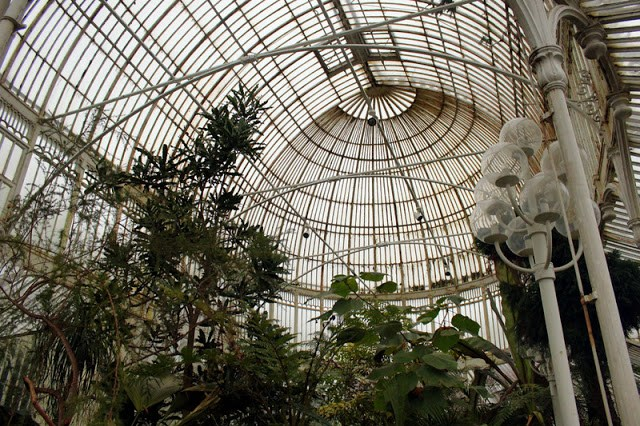 Palm House, Belfast