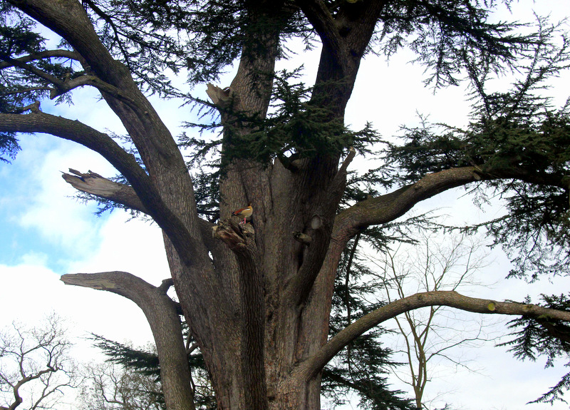 Trees in Painshill Park