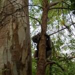 Animal encounters in Adelaide
