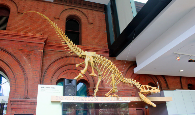 Dinosaur skeleton, South Australian Museum