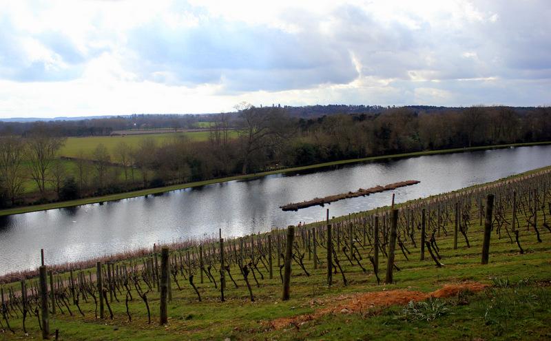Vineyards at Painshill Park