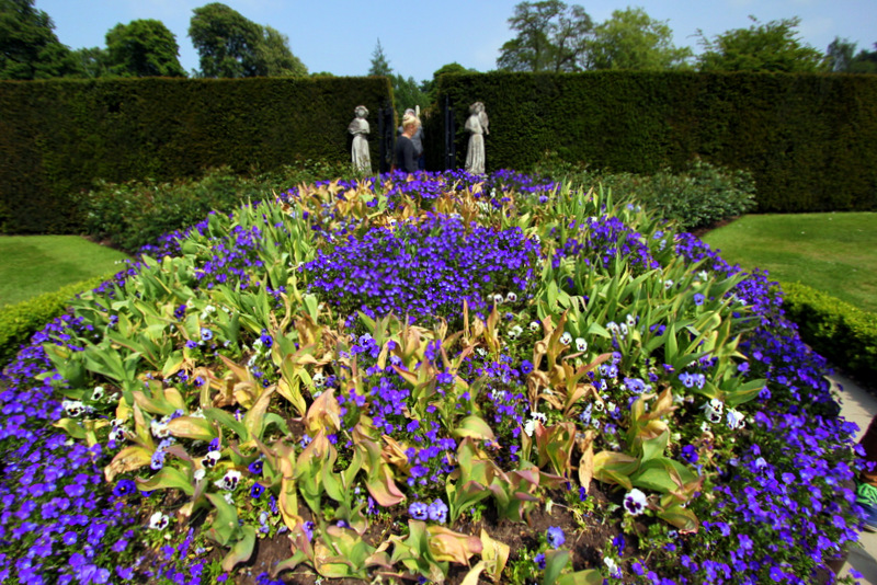 Flowers at Hever Castle