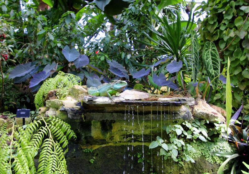 Iguana at Kew Gardens