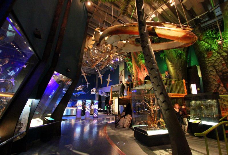 Natural history at Te Papa