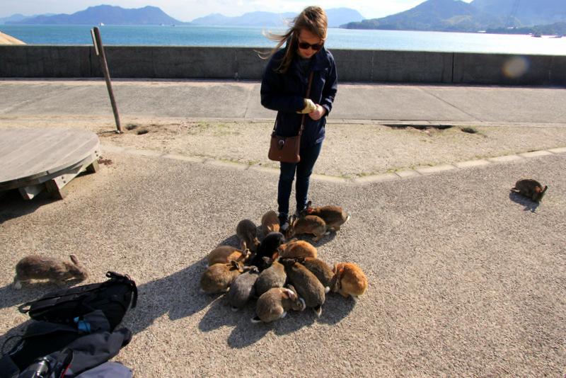 Feeding rabbits on Okunoshima.