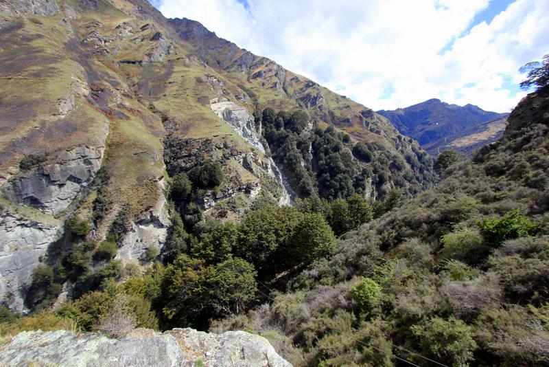Shotover Canyon Fox