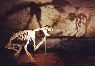 Discovering Australia's ancient animal kingdom at Naracoorte Caves