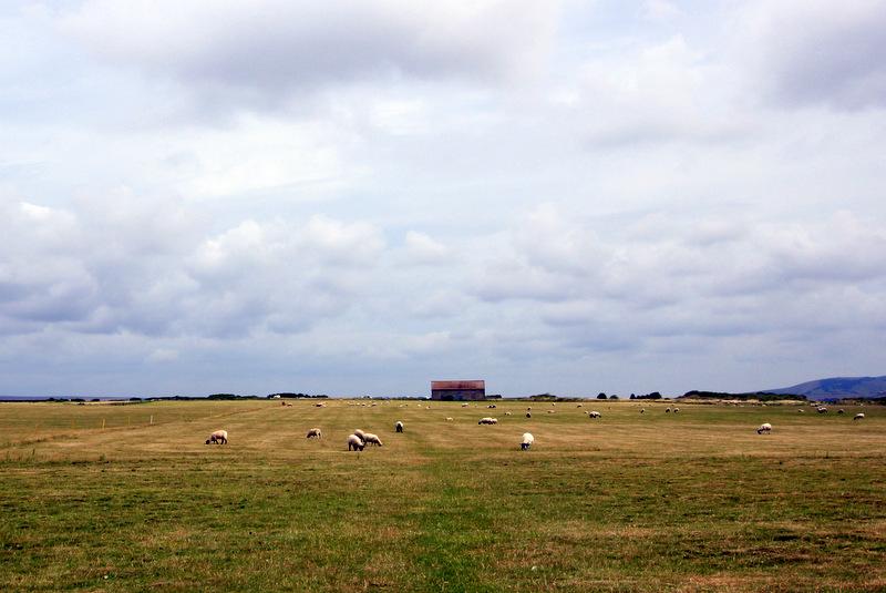 Sheep farm, South Downs