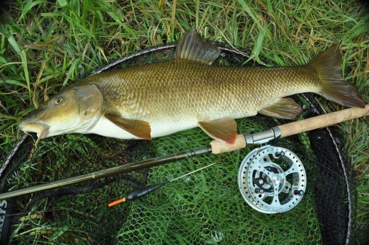 John Bailey fishing June 16 Angling Trust