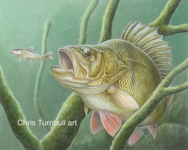 Chris_Turnbull_Angling_Art_Blog - 6
